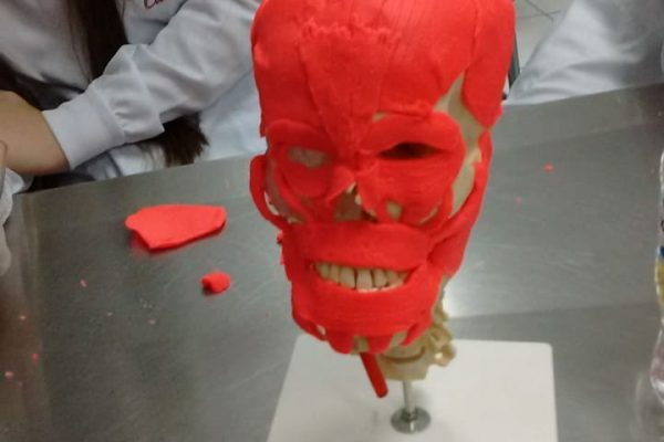 Odontologia da Guairacá utiliza metodologias ativas para ensino da musculatura facial